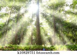 Light woods.