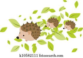 Mother hedgehog with babies