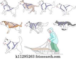 musher, und, hunde, mischling, n, streichholz