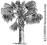 Plant Sabal palmetto