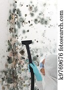 Professional cleaning mould off a wall