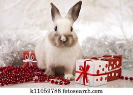Rabbit, bunny Christmas