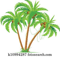 Three coconut palms