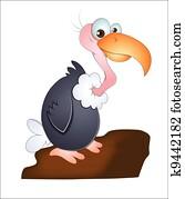 Vulture Bird