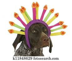 Stock Bild Alles Gute Geburtstag Schlafen Hund K28536525 Suche