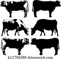 cattle - cow and bull