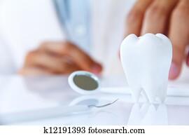 dentist holding molar