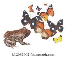 frog hungry