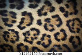 Leather Leopard.