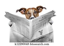 news dog