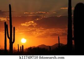 Sonora Desert Sunset