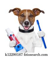 teeth cleaning dog