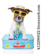 vacation tourist dog