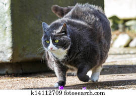 παχύσαρκος μαύρο μουνί