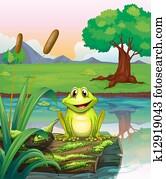A frog at the lake