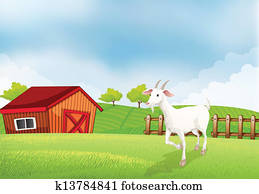 A Goat In The Farm With Wooden House At Back