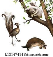 Australian animals: koala, platypus and lyrebird.
