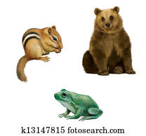 Bear, Chipmunk, and frog