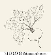 Beet root.