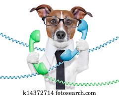 business dog