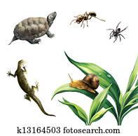 Coahuilan Box Turtle (Terrapene Coahuila), ant, spider, newt and snail on plants.