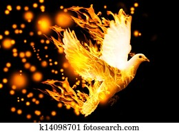 flying dove on fire