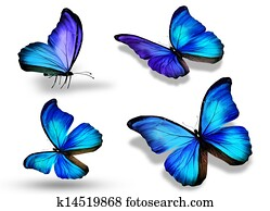 Four blue butterfly
