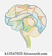 Gehirn Landkarte Clip Art K20495717 Fotosearch