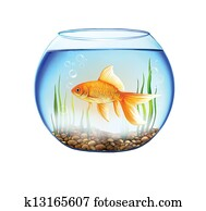 Gold fish in a Round aquarium with stones and plants. close up view of a fish bowl
