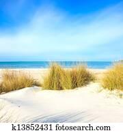Grass on a white sand dunes beach, ocean and sky