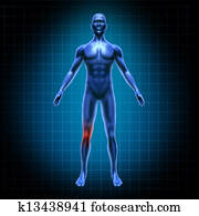 Human body knee pain