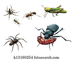 Insects: bee, ants, ground beetle eating caterpillar, bug and yellow meadow flowers