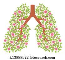 lungen, gesund