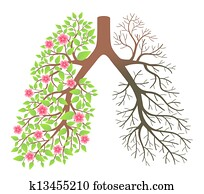 Lungs. Effect after smoking and disease
