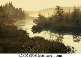 Misty river and pines in early morning light