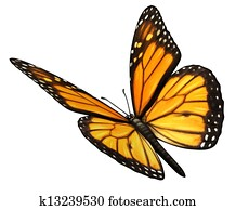 Monarch Butterfly Angled