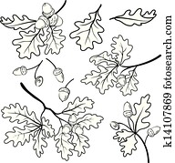 Oak branches with acorns, outline