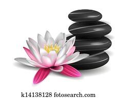 seerose, und, zen, steine