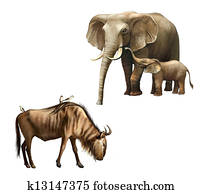 ako veľký je slony Dick