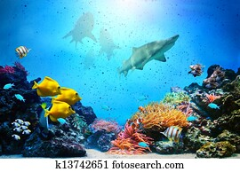 Underwater scene. Coral reef, fish groups, sharks in clear ocean water