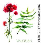 Valerian herb