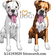 vektor, skizze, zwei, einheimischer hund, boxer, rasse