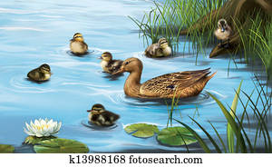Water birds, ducks and ducklings in the water