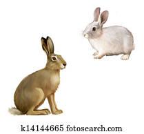 White Rabbit sitting, Gray hare. Isolated illustration
