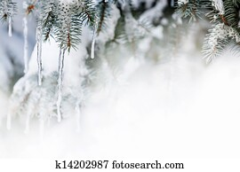 Winter background with icicles on fir tree