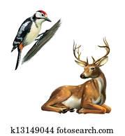 Woodpecker and Deer