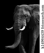 Artistic Black and White Elephant