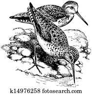 Bird Marsh Sandpiper
