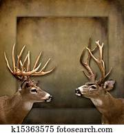 Buck/Deer Background