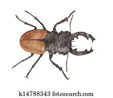 Stock Bild Abfallend Wald Tier Abfallend Käfer Tiere Alfred